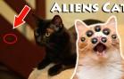 Gatos Aliens – Aliens Cats
