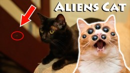 Gatos Aliens – Aliens Cats