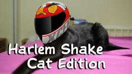 Harlem Shake (Cat Edition, Animal) Brazil
